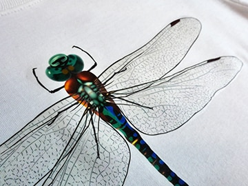 A dragonfly printed and pressed on CL Light